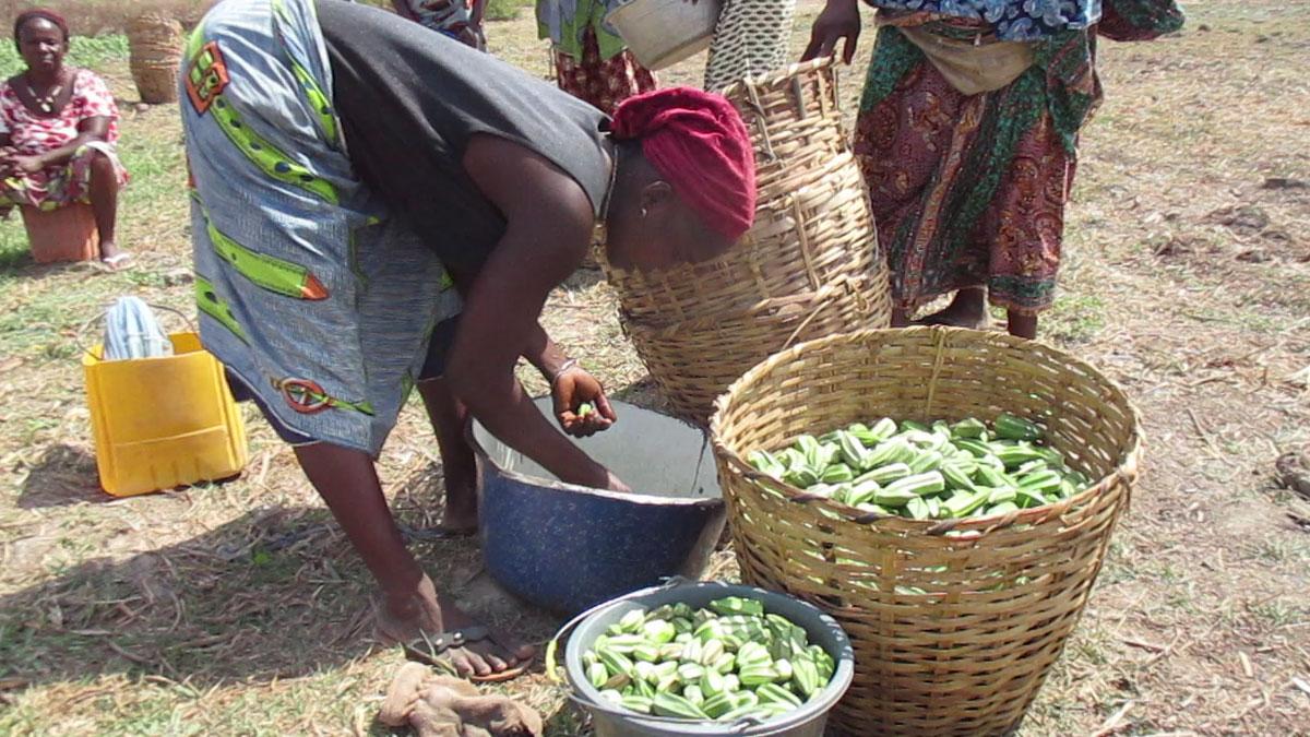 Een klant/verkoopster vult haar mand met okra